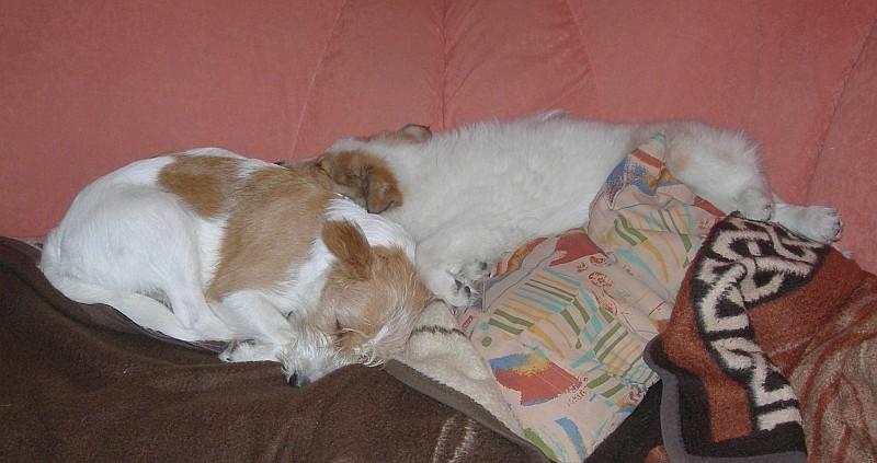 18.10.2011, wer viel tobt muß auch viel schlafen...... ;-)