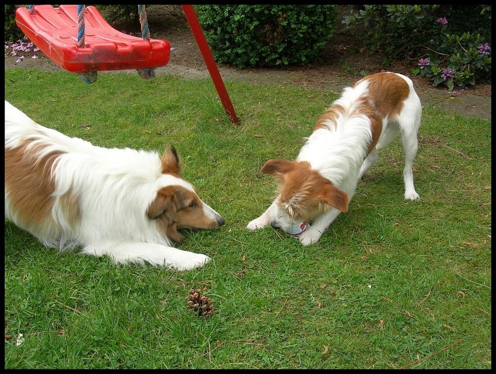 """09.06.2012  """"Hau ab Retti, das ist mein Joghurt!"""""""