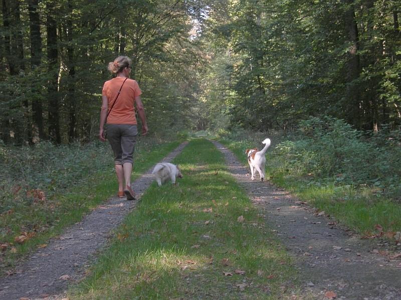 Amaretto ist zum ersten Mal mit Fritz(i) im Wald und ohne Leine, hat gut geklappt.
