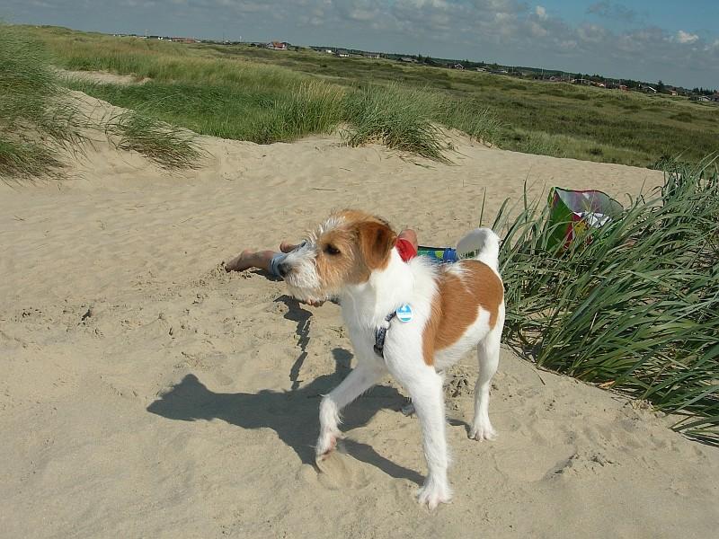 """""""Hau ab, oder ich schmeiß´ mit Sand!"""""""