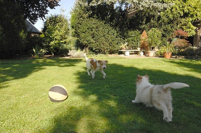 Schattenspielchen im Garten