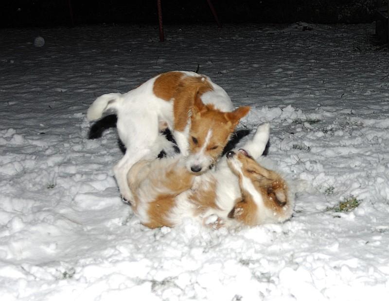 20.12.2011 7:00 Uhr der erste Schnee............