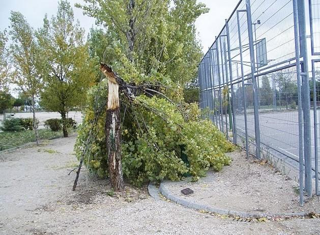 Octubre 2010. Denuncian el abandono de la Cuña Verde de Vicálvaro