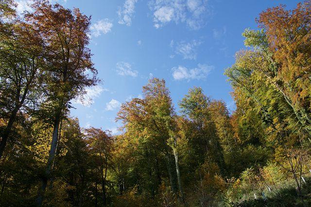 Der diesjährige kulturelle Anlass fand bei schönem Herbstwetter statt.