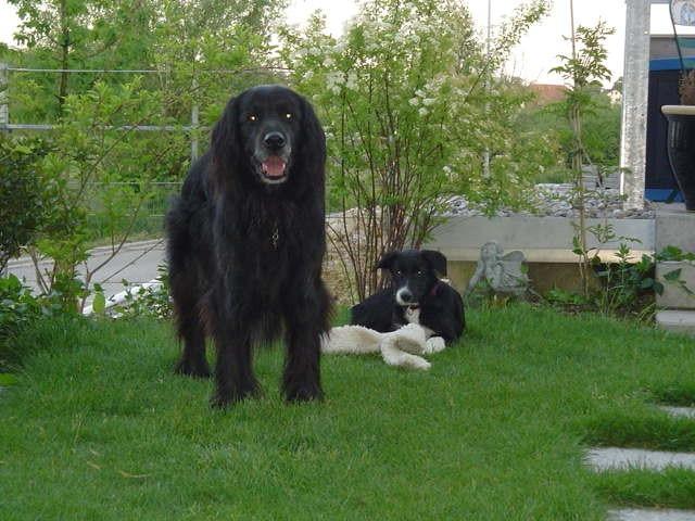 Nero und Molly ein unzertrennliches Paar