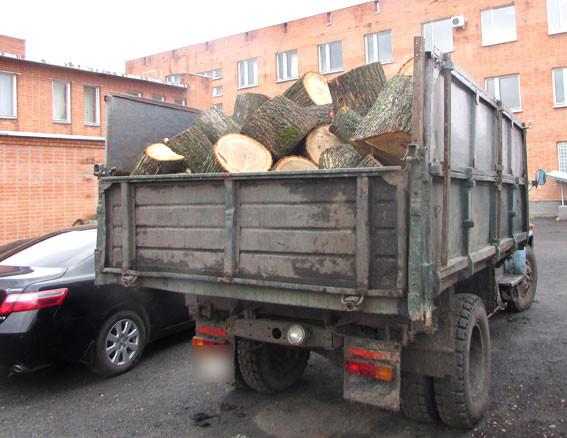 Той самий дуб. Фото ГУ НП в Полтавській області