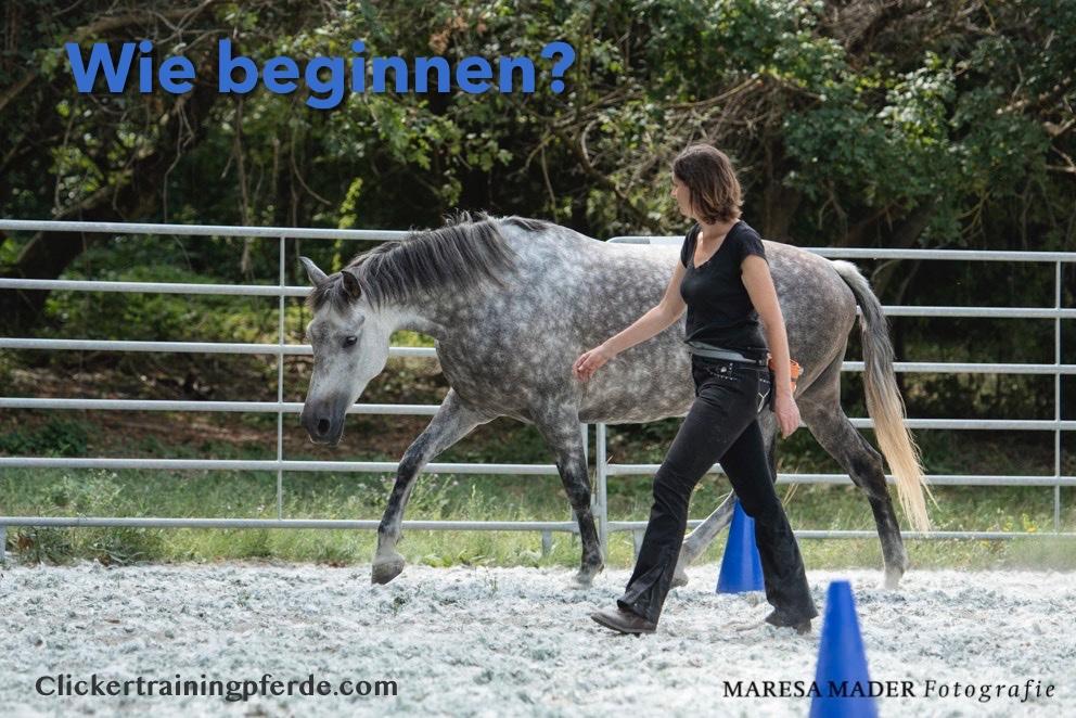 clickertraining, wo beginnen? Wo ist dein Pferd hier und heute?