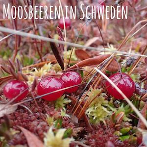 Blogpost: Moosbeeren in Schweden auf schwedenundso.de