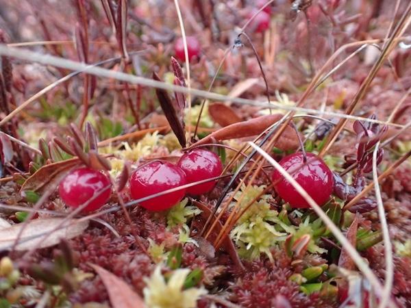 Blumenstrauß Schweden, Jedermannsrecht