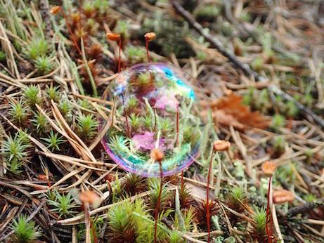 Seifenblase im Wald