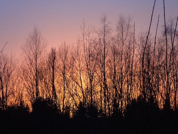 Bäume am Sonnenuntergangshimmel - Schweden und so