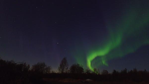 Aurora borealis über Wald, Schweden