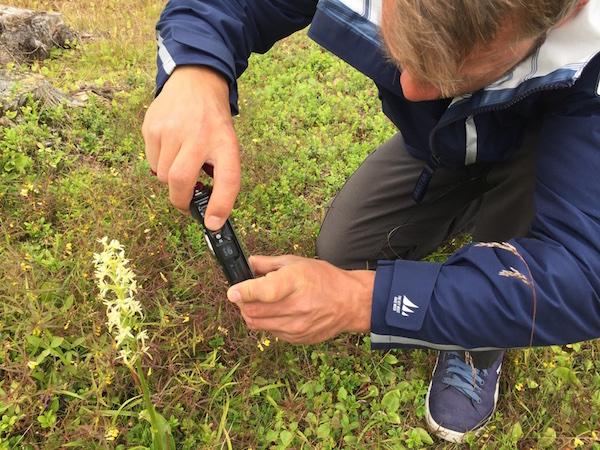 Mann fotografiert seltene Orchidee in Nordschweden