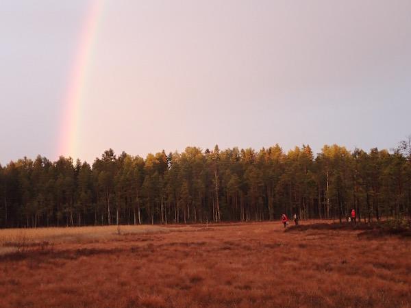 Beerensammeln im schwedischen Herbst, Moor, Wald, Regenbogen