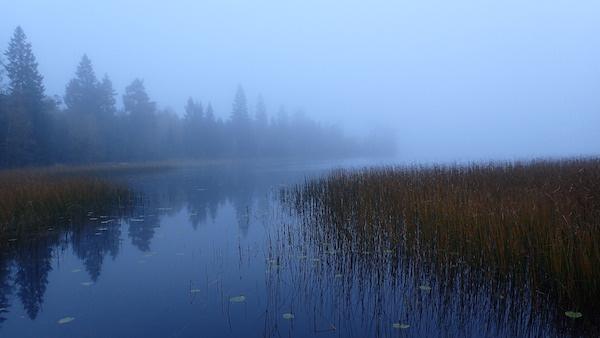 Nebliger Herbst über Moor in Schweden