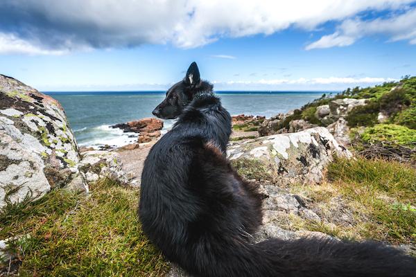 Hovs Hallar, Steine, Meer und Hund