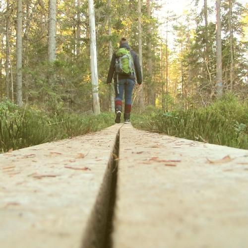 Auf Planken im Moor