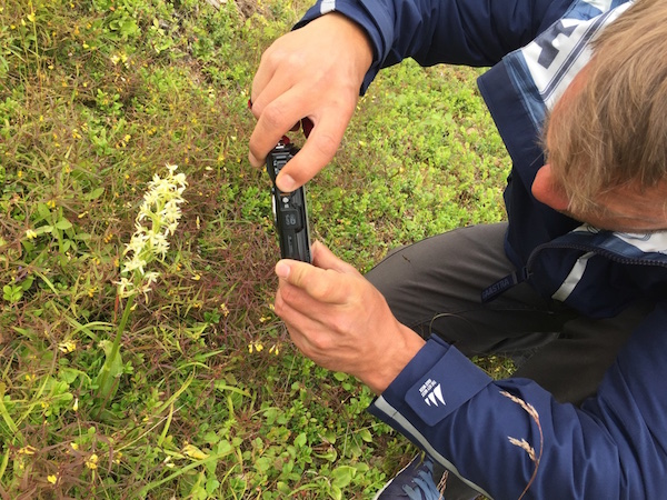 Mann beim Orchideen fotografieren in Nordschweden