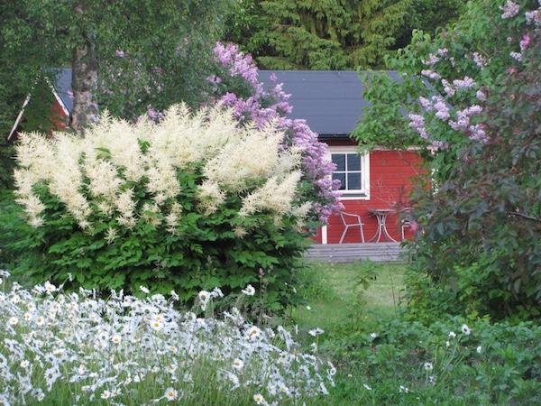 Typisches rotes Schwedenhaus mit Sträuchern davor, Norrbyskär, Nordschweden