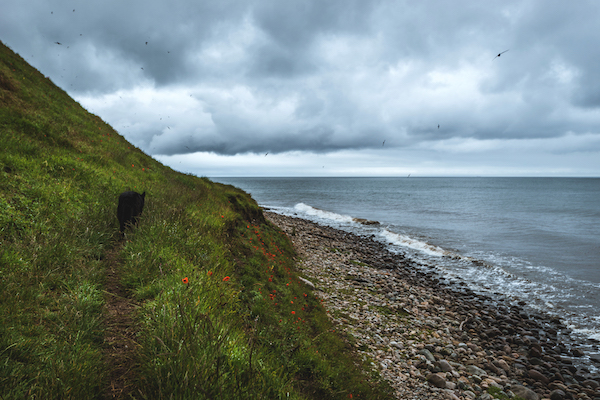 Schwarzer Hund an der schwedischen Küste, Hovs Hallar