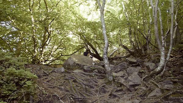 Im Wald im Kullaberg Naturreservat