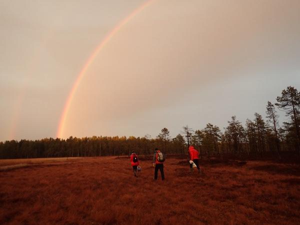 Beerensammeln im Herbst in Schweden