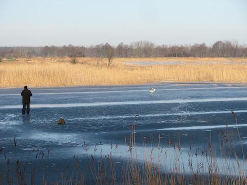 Reiher und Eisangler auf dem zugefrorenen Ryck bei Greifswald.