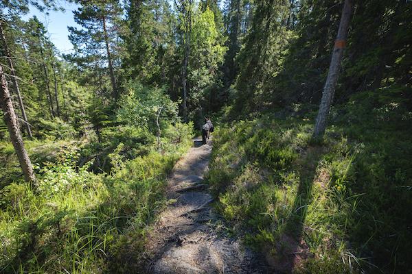 Hund mit Packtaschen im Wald in Schweden