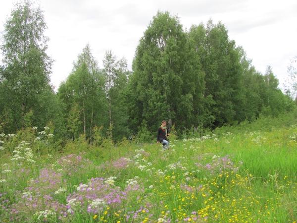 Spaziergang Blumenwiese, Granö