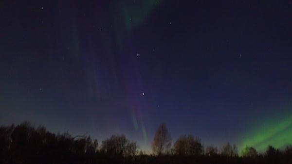 Nordlichter über Wald in Schweden