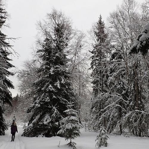 Ein Wintertag auf Holmön (mit Video!)