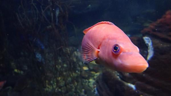 Fisch im Ozeaneum, Stralsund