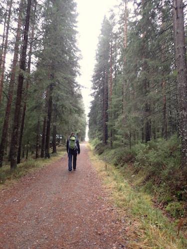Wandern auf der Tavelsjö runt.