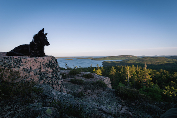 Hund auf dem Slattdalsberget, im Hintergrund Wald und Schären