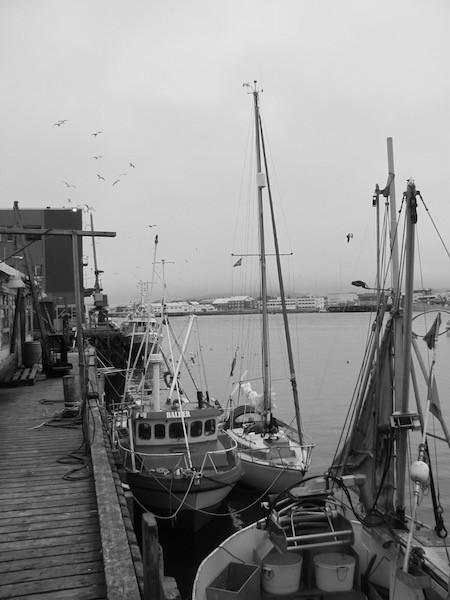 Pouncer am Fischerboot. Hinten Fischfabrik und Möwen. Vardø, Norwegen.