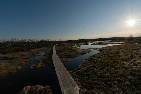 Holzsteg über moorige Landschaft in Schweden. Im Artikel: Tipps für den Schwedenurlaub