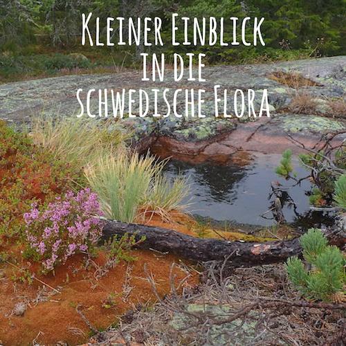 Pflanzen in Schweden / Schwedische Flora