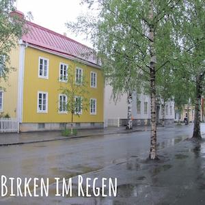 Blogpost: Birken im Regen auf schwedenundso.de