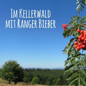 Blogpost: Im Kellerwald mit Ranger Bieber auf schwedenundso.de