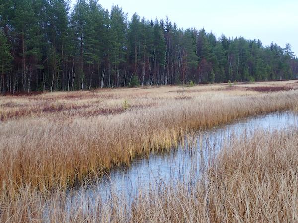 Herbstszene im Moor in Schweden