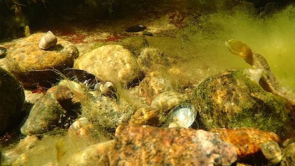 Unterwasseraufnahme: Schnecken und Muscheln