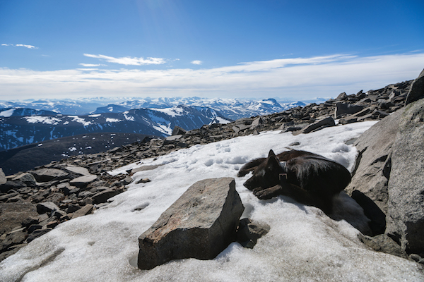 Schwarze Hund im Schnee auf dem Kebnekaise in Schweden