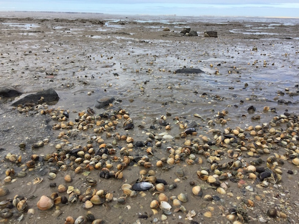 Watt und Muscheln, Nordsee, Ostfriesland