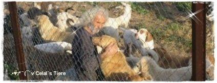 Tessa e.V, Celal Üner, Karsiyaka, Izmir, Türkei-Tierschutz, Celals Tiere,