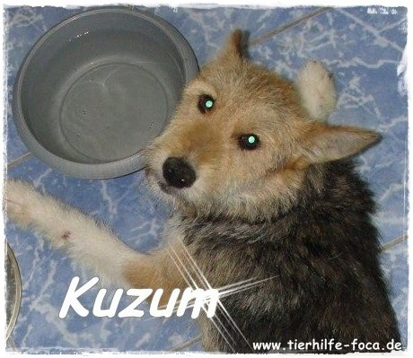 Nilgün Karsilayan, Tierheim Foca, Tierheim Özdere, Akupunktur, Tierquälerei Türkei, Tierschutz Türkei, Izmir Tierfreunde,Tierhilfe Pfalz,