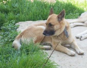 Yenifoça, TESSA e.V., Nilgün Karsilayan, Tierschutz Türkei, Tierhilfe- Foca