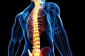 背骨 腰痛 神経