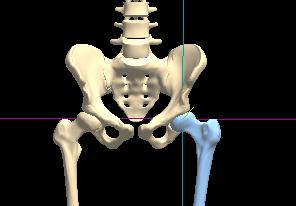 股関節 体型 ヒップ