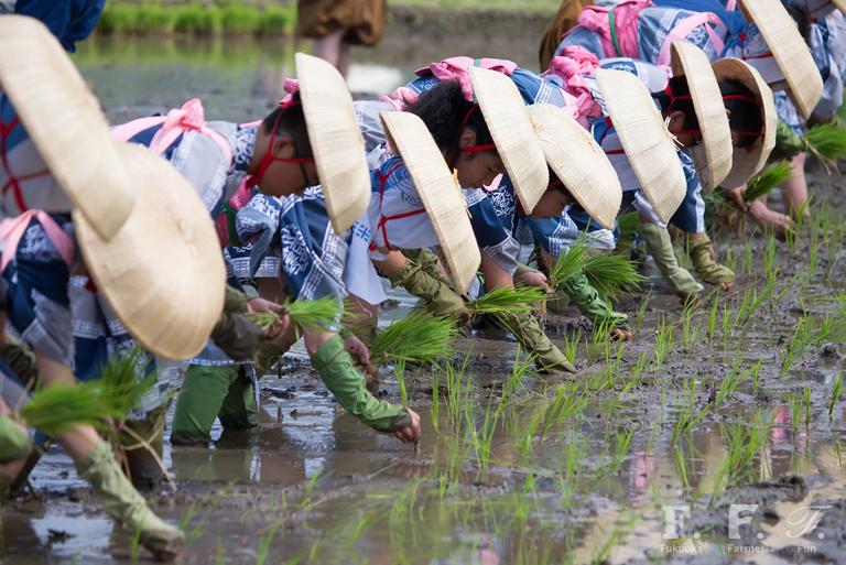 伝統的な姿で丁寧に田植えをする小学生