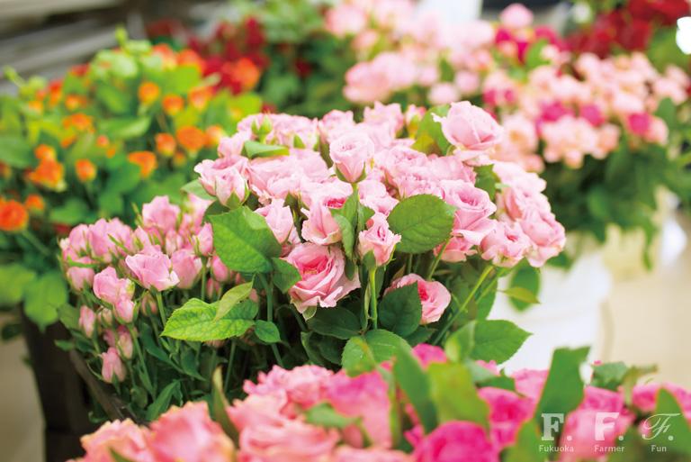 北崎の花々